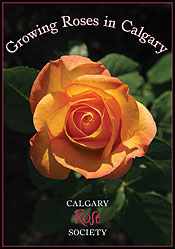 Growing Roses In Calgary